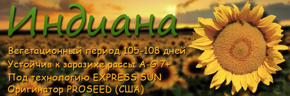 Гибрид подсолнечника Индиана EXPRESS SUN США 7+