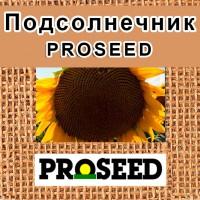 Семена подсолнечника компании Proseed