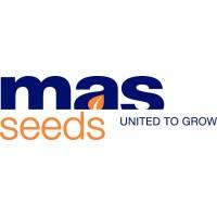 MAS Seeds - оригинальные семена от официального производителя
