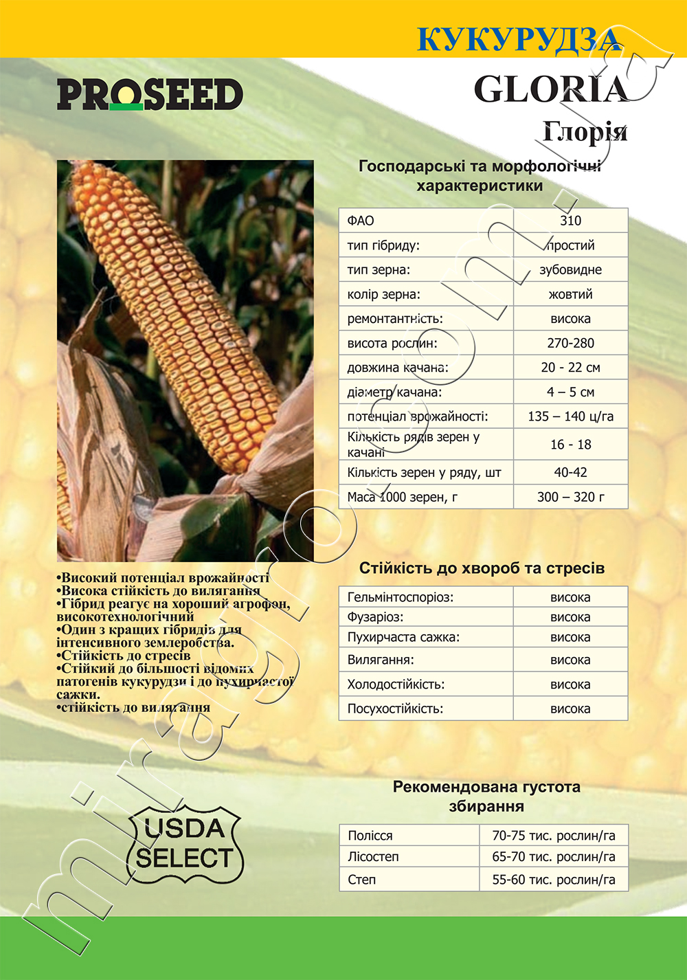 Гибрид кукурузы Глория (Gloria) - описание каталог