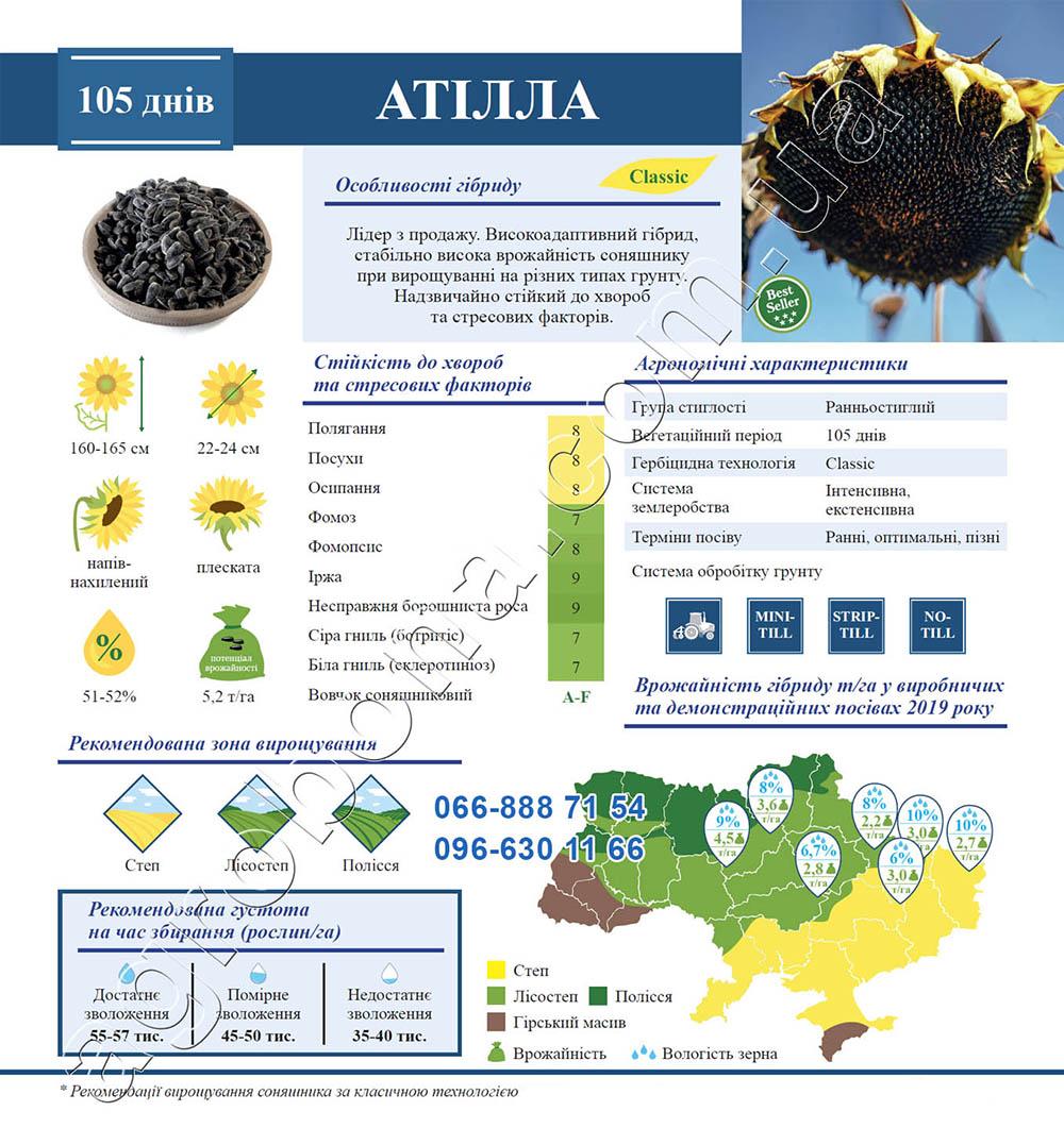 Описание подсолнечника Атилла