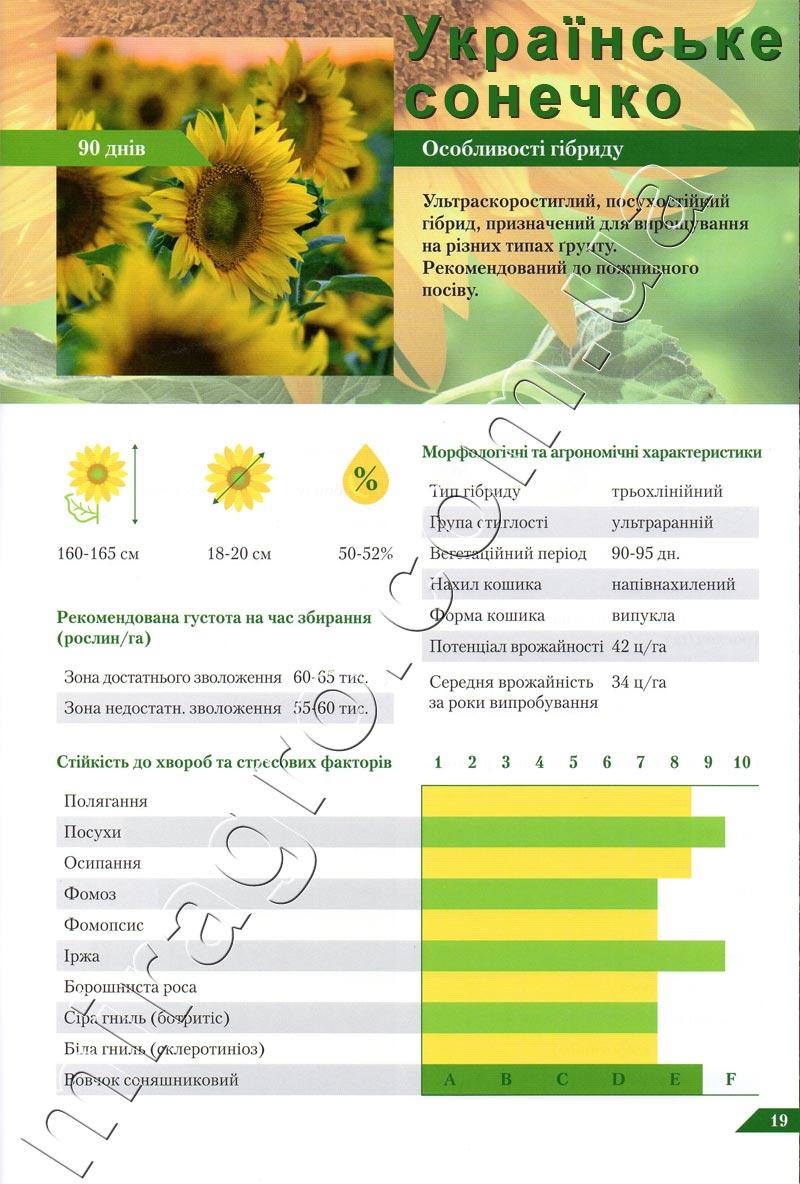 Описание подсолнечника Украинское солнышко