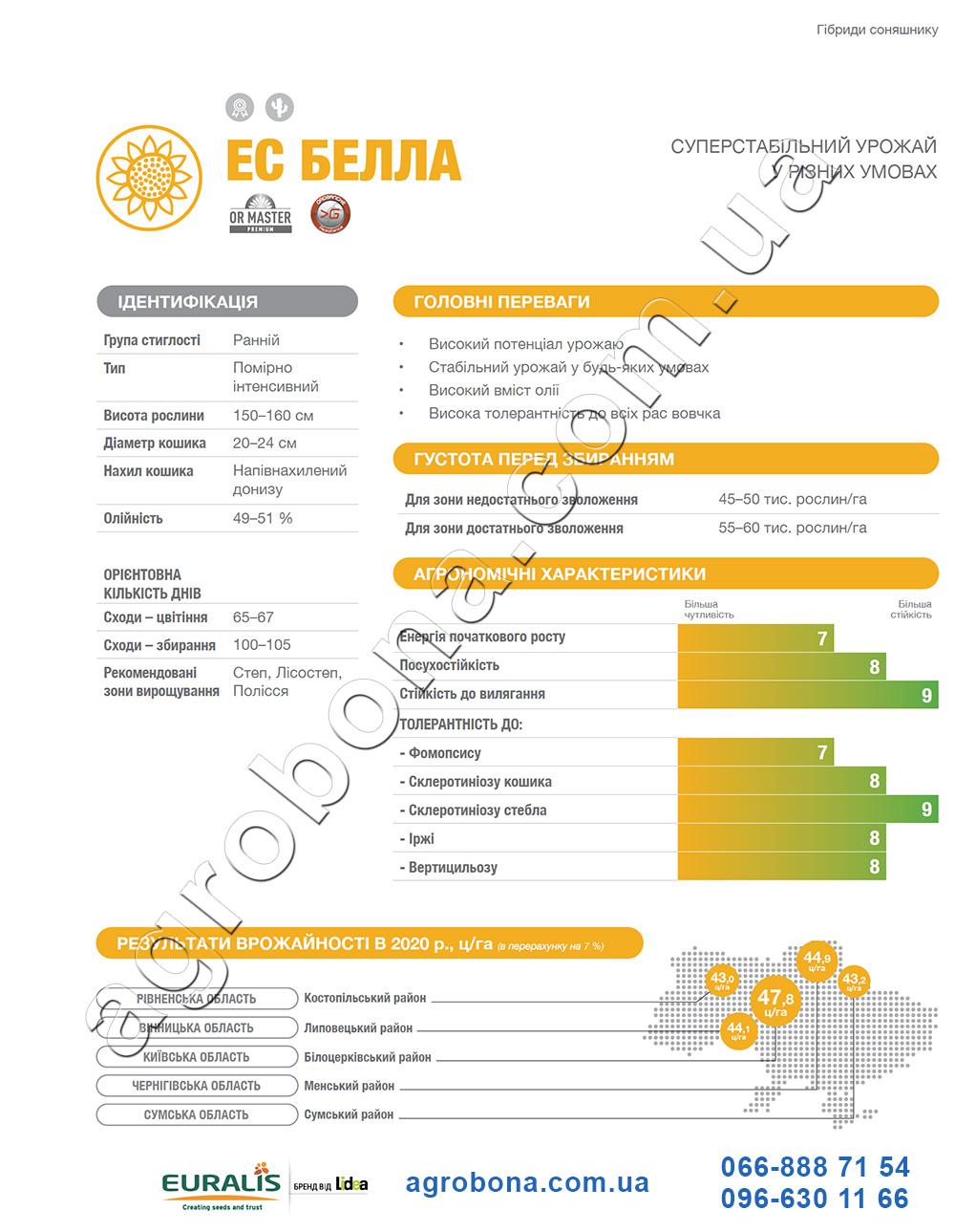 Подсолнечник ЕС Белла каталог