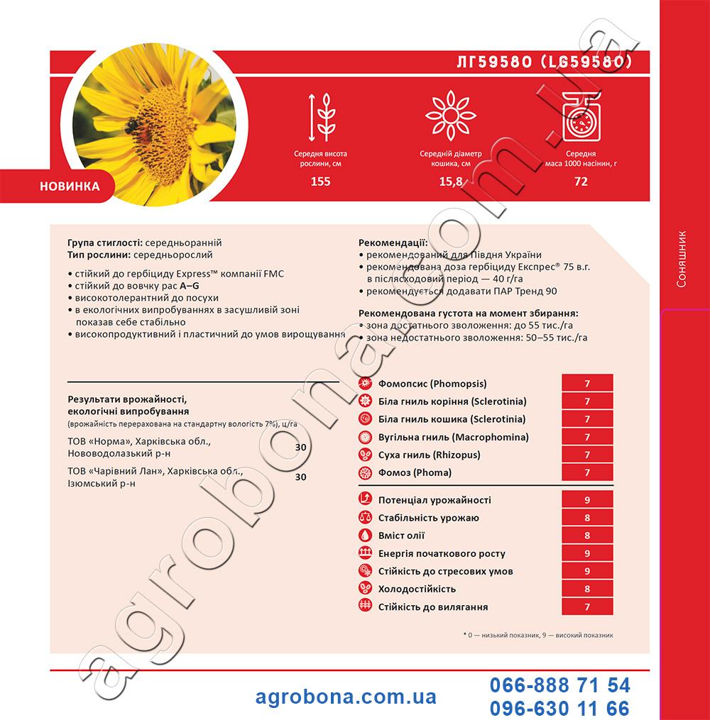Подсолнечник ЛГ 59580 каталог