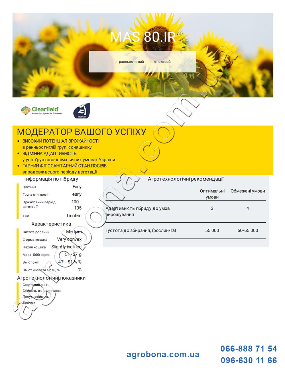 Описание и отзывы подсолнечник МАС 80.ІР (MAS 80.IR)
